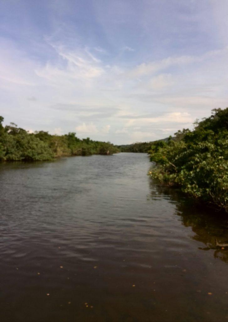 西表島のマングローブクローズ