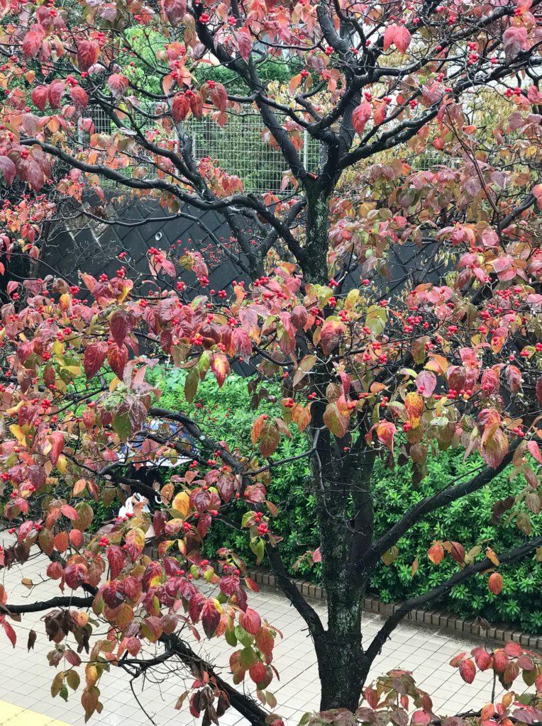 ビストロアンジュの外にあった南天の木